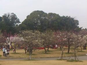 2013年豊橋向山緑地梅まつり