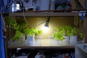 LED水耕栽培 場所