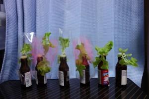 蛍光ペンによるピンク農法30日目-1