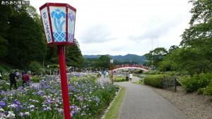 賀茂しょうぶ園 花しょうぶ祭り(1)