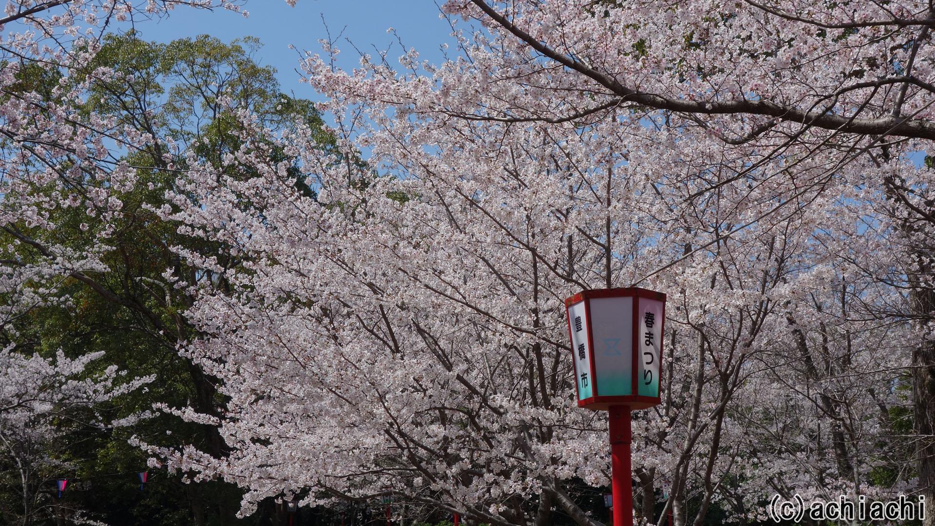 2018年豊橋市向山緑地桜まつり